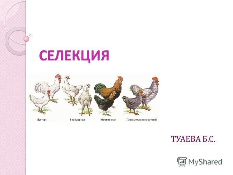 СЕЛЕКЦИЯ ТУАЕВА Б.С.