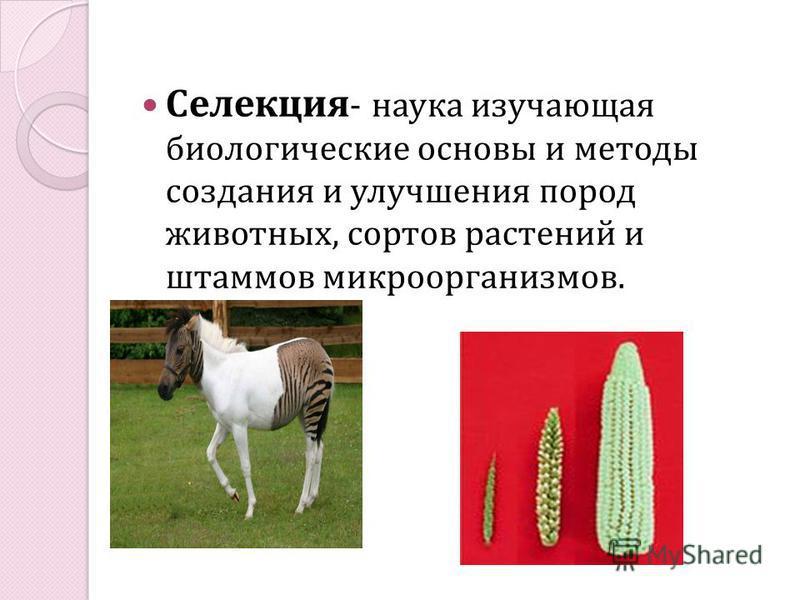 Селекция - наука изучающая биологические основы и методы создания и улучшения пород животных, сортов растений и штаммов микроорганизмов.