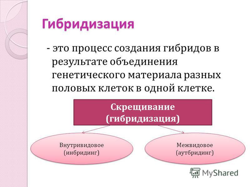 Гибридизация - это процесс создания гибридов в результате объединения генетического материала разных половых клеток в одной клетке. Скрещивание (гибридизация) Внутривидовое (инбридинг) Внутривидовое (инбридинг) Межвидовое (аутбридинг) Межвидовое (аут