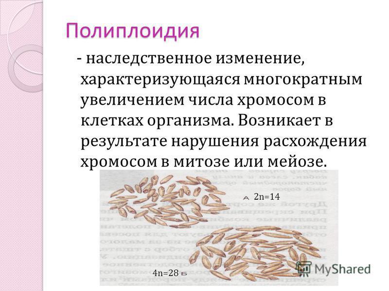 Полиплоидия - наследственное изменение, характеризующаяся многократным увеличением числа хромосом в клетках организма. Возникает в результате нарушения расхождения хромосом в митозе или мейозе. 4n=28 2n=14