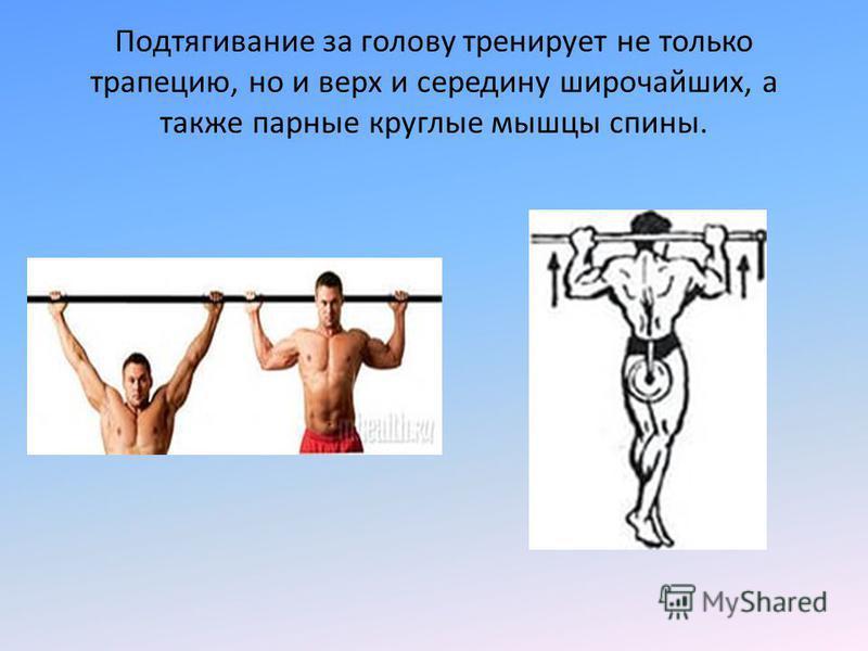 Подтягивание за голову тренирует не только трапецию, но и верх и середину широчайших, а также парные круглые мышцы спины.