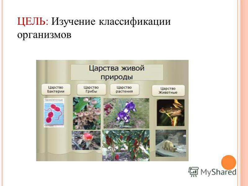 ЦЕЛЬ: Изучение классификации организмов