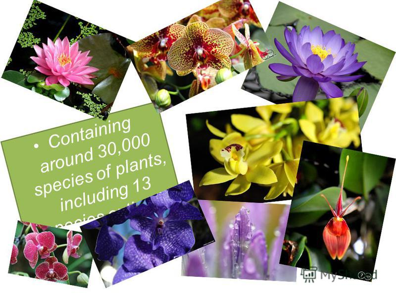 Containing around 30,000 species of plants, including 13 species extinct in the wild.