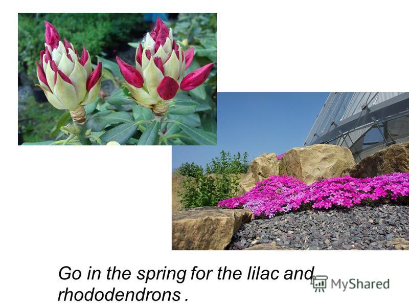 Go in the spring for the lilac and rhododendrons.
