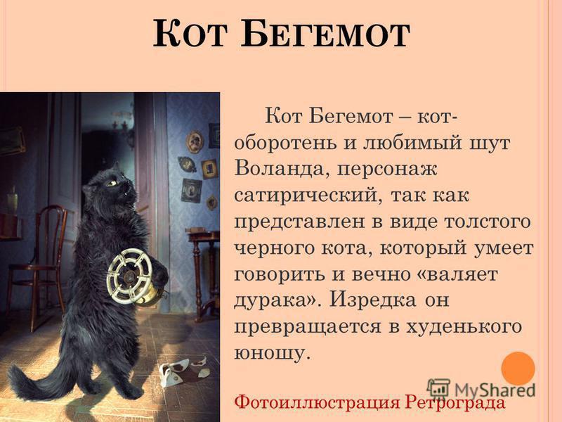 К ОТ Б ЕГЕМОТ Кот Бегемот – кот- оборотень и любимый шут Воланда, персонаж сатирический, так как представлен в виде толстого черного кота, который умеет говорить и вечно «валяет дурака». Изредка он превращается в худенького юношу. Фотоиллюстрация Рет