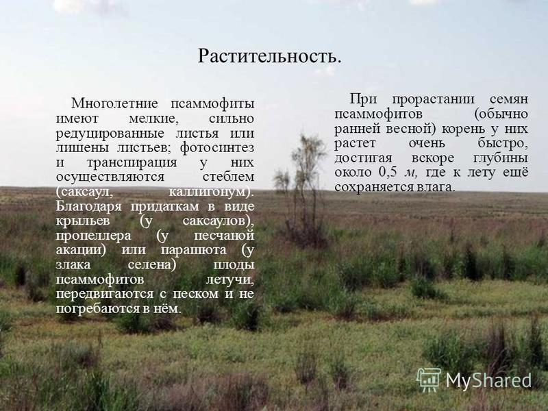 Растительность. Многолетние псаммофиты имеют мелкие, сильно редуцированные листья или лишены листьев; фотосинтез и транспирация у них осуществляются стеблем (саксаул, каллигонум). Благодаря придаткам в виде крыльев (у саксаулов), пропеллера (у песчан