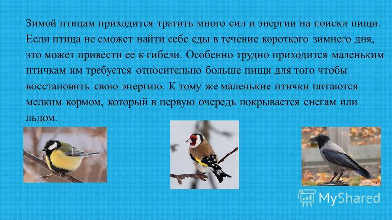 Зимой птицам приходится тратить много сил и энергии на поиски пищи. Если птица не сможет найти себе еды в течение короткого зимнего дня, это может привести ее к гибели. Особенно трудно приходится маленьким птичкам им требуется относительно больше пищ