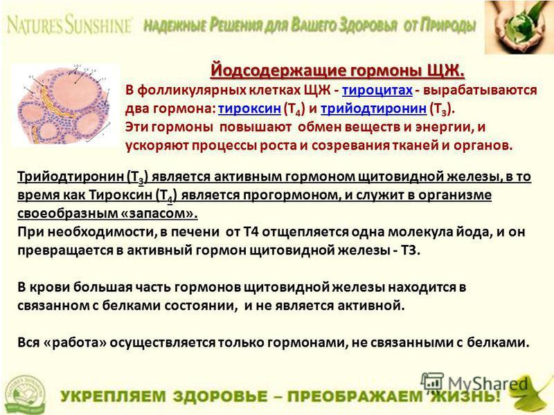 Йодсодержащие гормоны ЩЖ. В фолликулярных клетках ЩЖ - тироцитах - вырабатываются два гормона: тироксин (T 4 ) и трийодтиронин (T 3 ).тироцитахтироксинтрийодтиронин Эти гормоны повышают обмен веществ и энергии, и ускоряют процессы роста и созревания