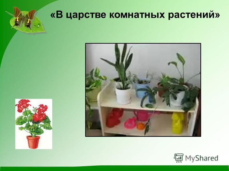 «В царстве комнатных растений»