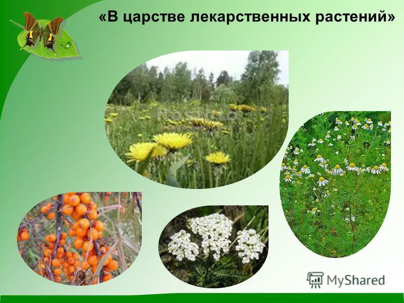 «В царстве лекарственных растений»