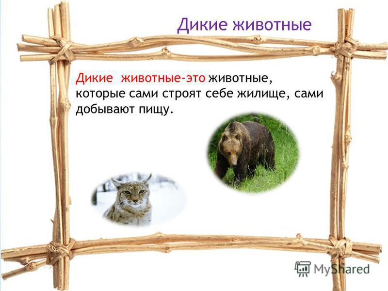 Кошка –домашнее животно, символ домашнего тепла и уюта. Нежное очаровательное создание