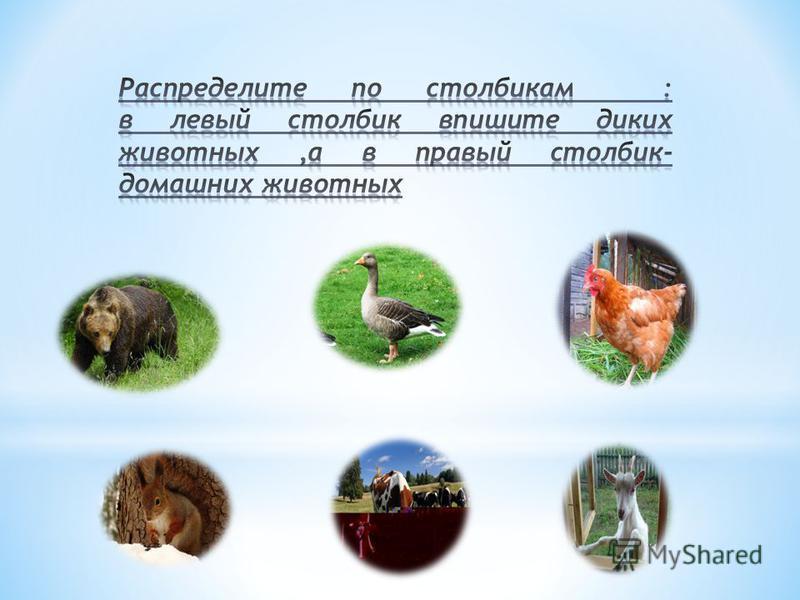 1. Домашние животные –это животные, которые сами строят себе жилище, сами добывают пищу. 2.Волк, лиса, медведь, рысь-домашние животные. 3.Кот,корова,коза –дикие животные.