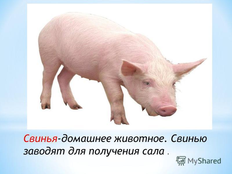 Овца –домашнее животное.Овец заводят для получения шерсти и мяса, также разводят для получения овечьего молока, брынзы, кулинарного жира и шкур (овчины)