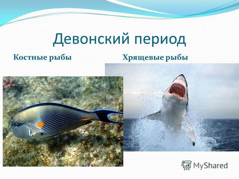 Девонский период Костные рыбы Хрящевые рыбы