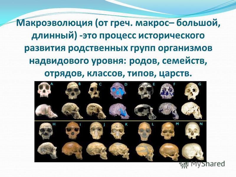 Макроэволюция (от греч. макрос– большой, длинный) -это процесс исторического развития родственных групп организмов над видового уровня: родов, семейств, отрядов, классов, типов, царств.
