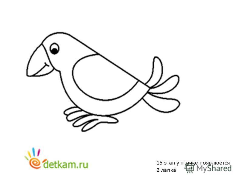 15 этап у птичке появляется 2 лапка