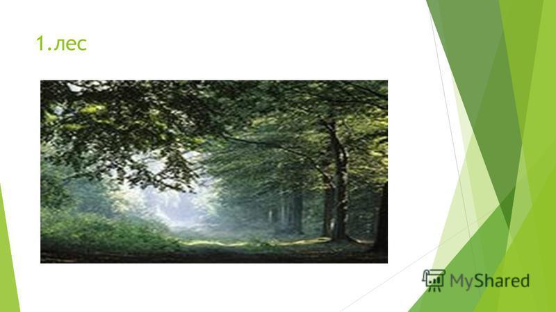1.лес