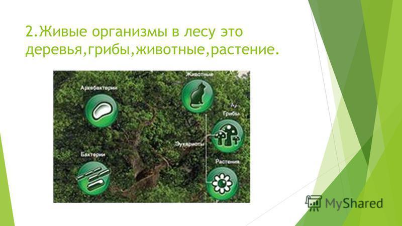 2. Живые организмы в лесу это деревья,грибы,животные,растение.
