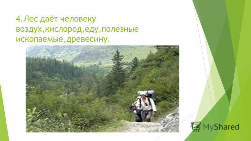 4. Лес даёт человеку воздух,кислород,еду,полезные ископаемые,древесину.