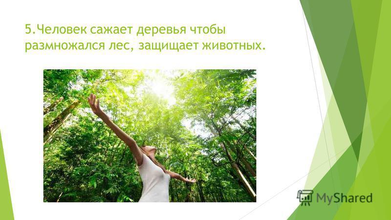 5. Человек сажает деревья чтобы размножался лес, защищает животных.