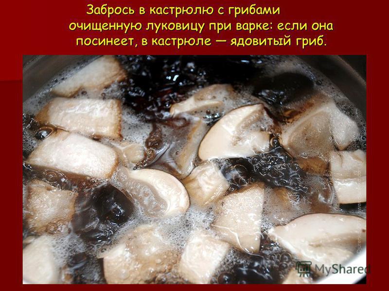 Забрось в кастрюлю с грибами очищенную луковицу при варке: если она посинеет, в кастрюле ядовитый гриб.