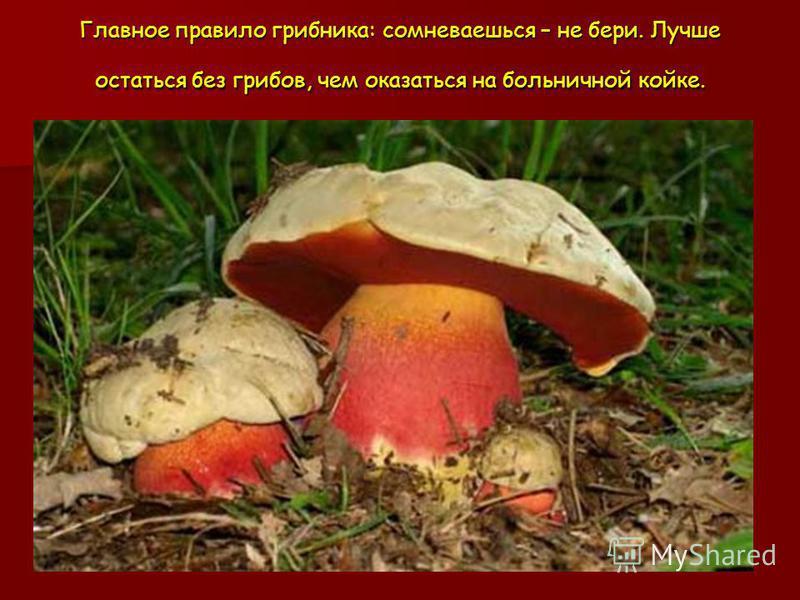 Главное правило грибника: сомневаешься – не бери. Лучше остаться без грибов, чем оказаться на больничной койке.