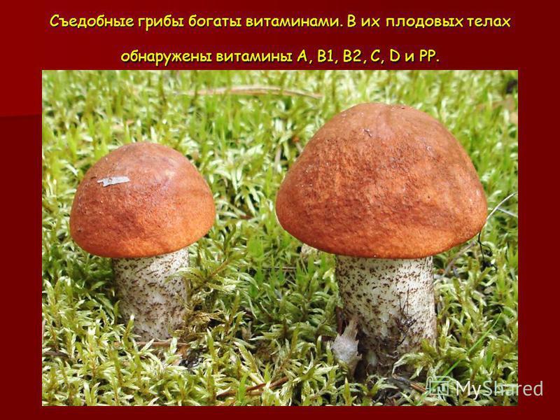Съедобные грибы богаты витаминами. В их плодовых телах обнаружены витамины А, В1, В2, С, D и РР.