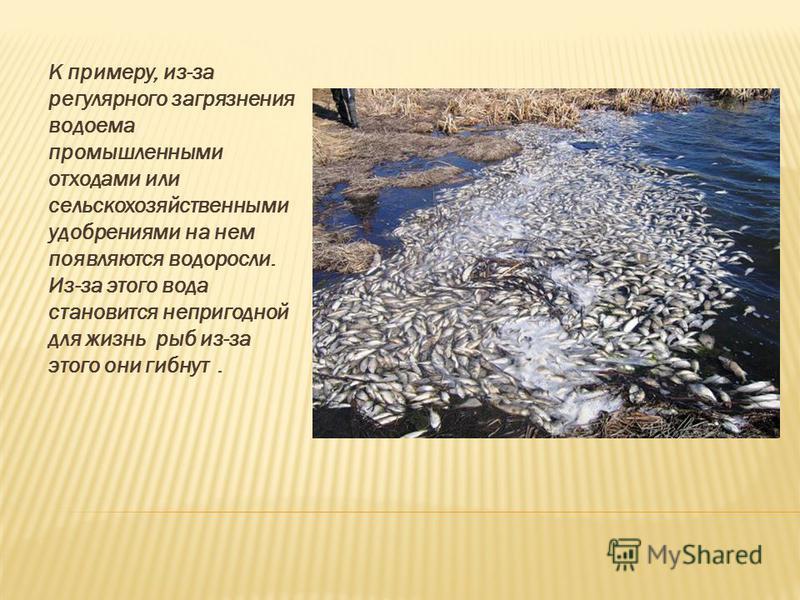 К примеру, из-за регулярного загрязнения водоема промышленными отходами или сельскохозяйственными удобрениями на нем появляются водоросли. Из-за этого вода становится непригодной для жизнь рыб из-за этого они гибнут.