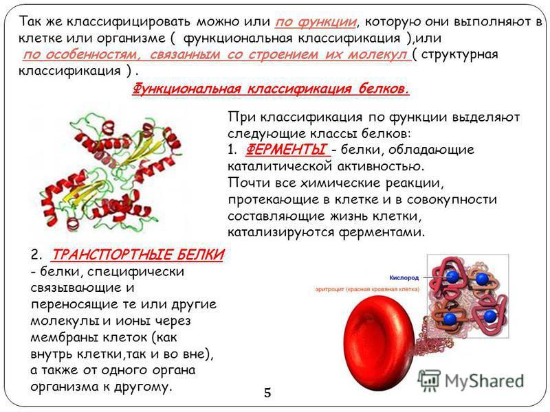 Функциональная классификация белков. При классификация по функции выделяют следующие классы белков: 1. ФЕРМЕНТЫ - белки, обладающие каталитической активностью. Почти все химические реакции, протекающие в клетке и в совокупности составляющие жизнь кле