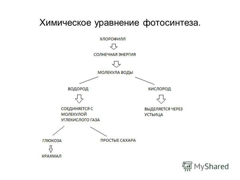 Химическое уравнение фотосинтеза.