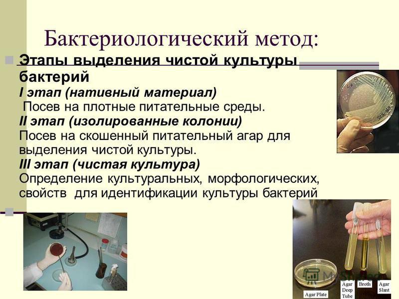 Бактериологический метод: Этапы выделения чистой культуры бактерий I этап (нативный материал) Посев на плотные питательные среды. II этап (изолированные колонии) Посев на скошенный питательный агар для выделения чистой культуры. III этап (чистая куль