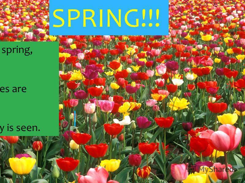SPRING!!! Spring, spring, spring! The trees are green, Blue sky is seen.