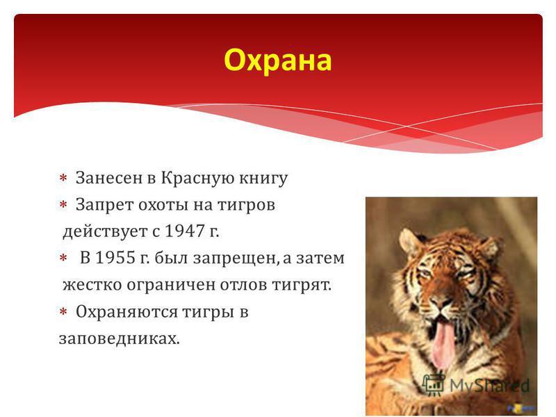 Занесен в Красную книгу Запрет охоты на тигров действует с 1947 г. В 1955 г. был запрещен, а затем жестко ограничен отлов тигрят. Охраняются тигры в заповедниках. Охрана