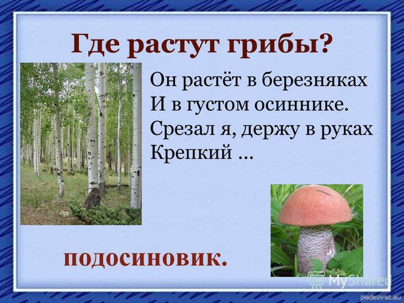 Где растут грибы? Он растёт в березняках И в густом осиннике. Срезал я, держу в руках Крепкий... подосиновик.