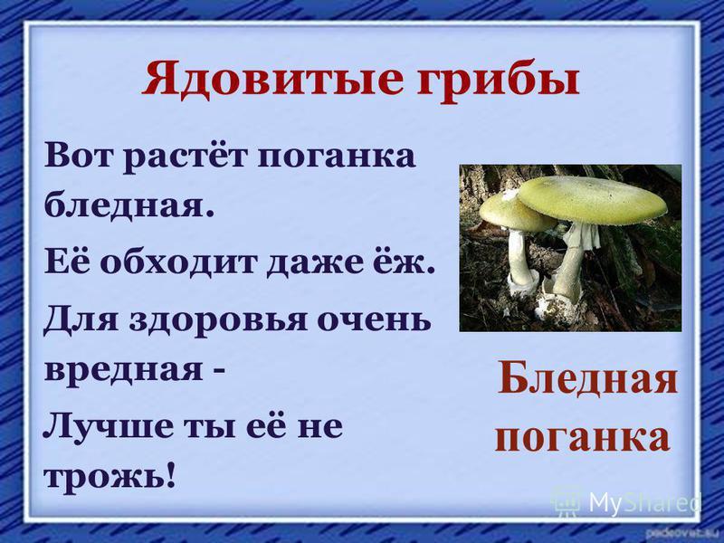 Ядовитые грибы Вот растёт поганка бледная. Её обходит даже ёж. Для здоровья очень вредная - Лучше ты её не трожь! Бледная поганка