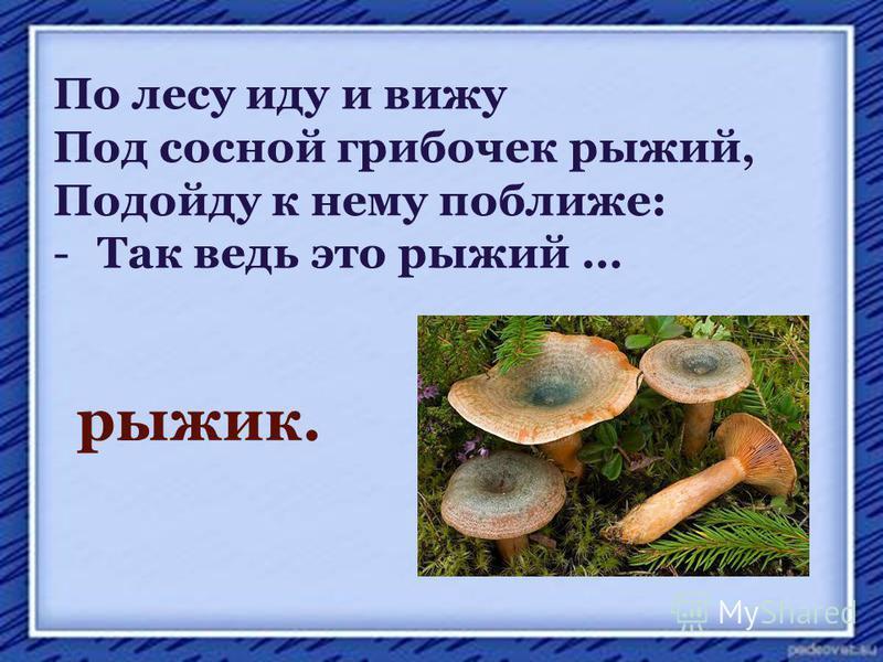 По лесу иду и вижу Под сосной грибочек рыжий, Подойду к нему поближе: -Так ведь это рыжий … рыжик.