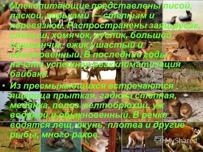 Млекопитающие представлены лисой, лаской, хорьками степным и перевязкой. Распространены заяц-русак, слепыш, хомячок, суслик, большой тушканчик, ежик ушастый и обыкновенный. В последние годы начата успешная реакклиматизация байбака. Из пресмыкающихся
