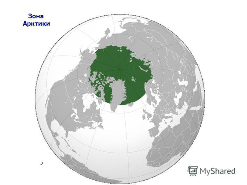 Зона Арктики