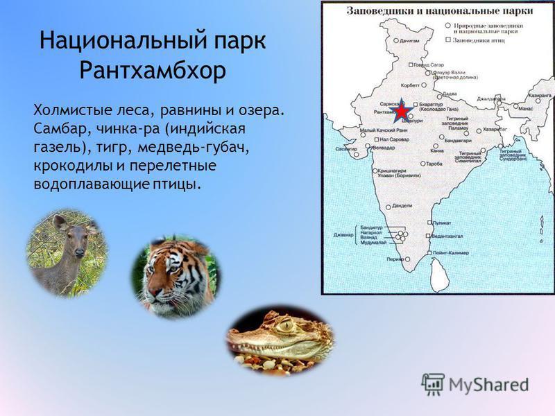 Национальный парк Рантхамбхор Холмистые леса, равнины и озера. Самбар, чинка-ра (индийская газель), тигр, медведь-губач, крокодилы и перелетные водоплавающие птицы.