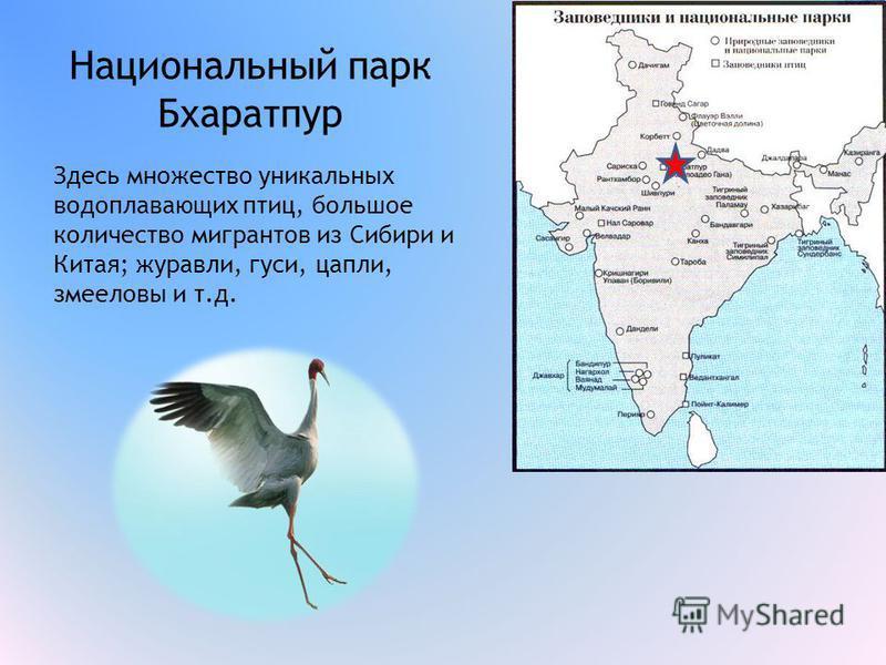 Национальный парк Бхаратпур Здесь множество уникальных водоплавающих птиц, большое количество мигрантов из Сибири и Китая; журавли, гуси, цапли, змееловы и т.д.