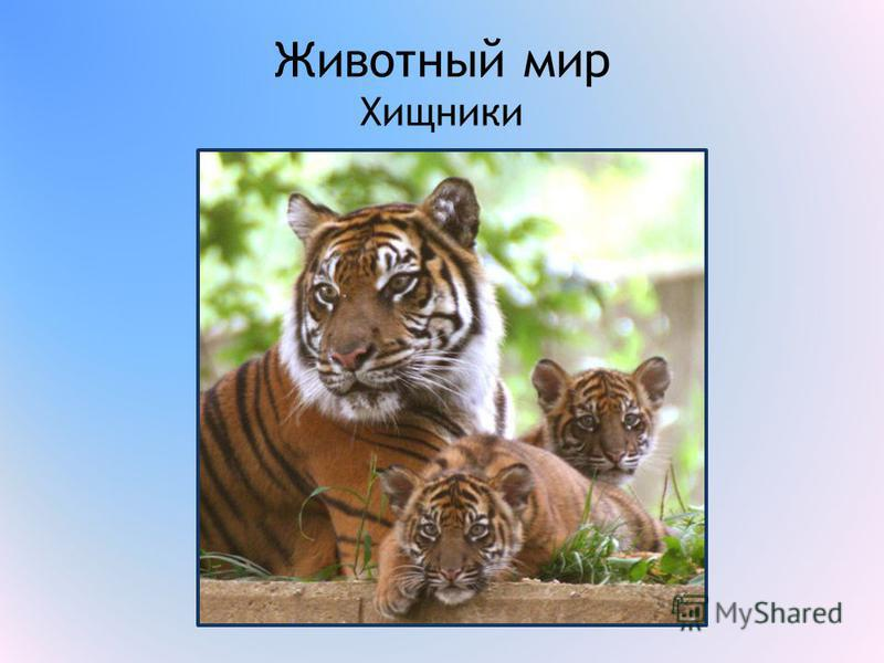 Животный мир Хищники