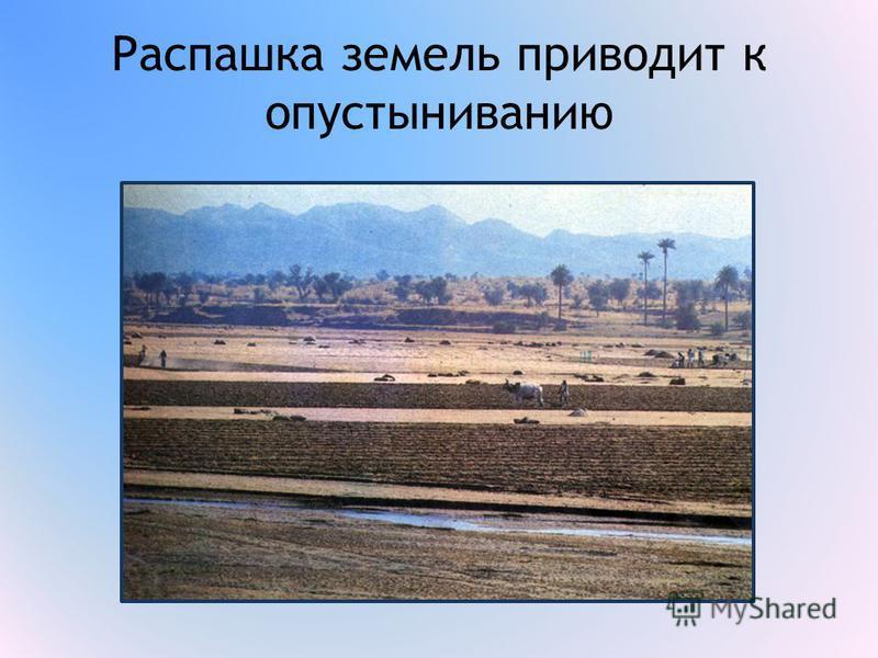 Распашка земель приводит к опустыниванию
