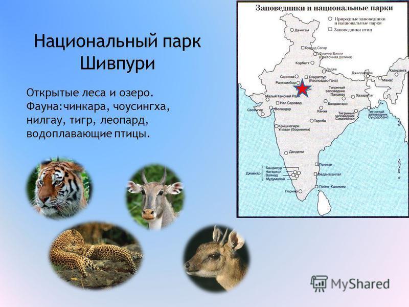 Национальный парк Шивпури Открытые леса и озеро. Фауна:чинкара, чоусингха, нильгау, тигр, леопард, водоплавающие птицы.