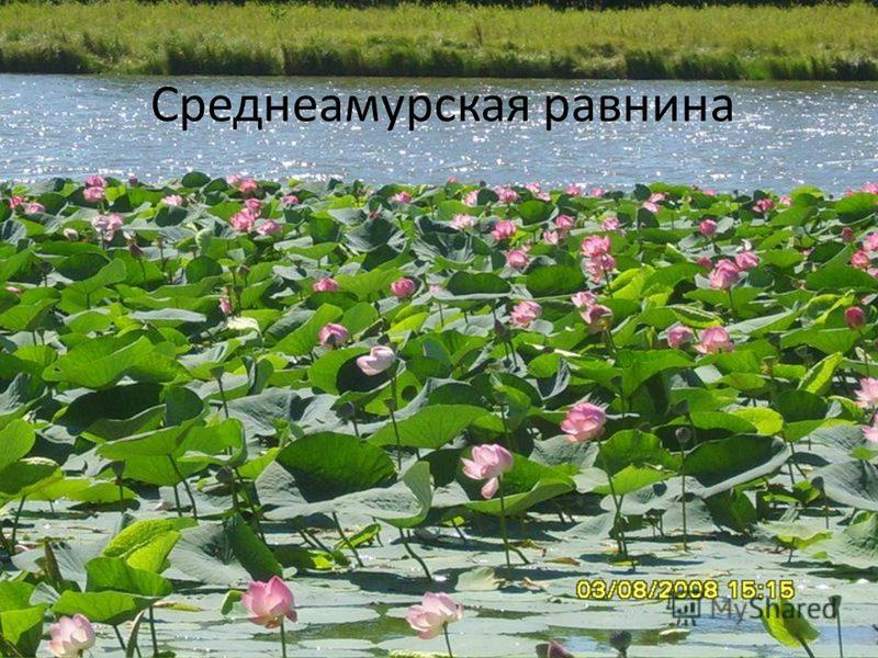 Среднеамурская равнина