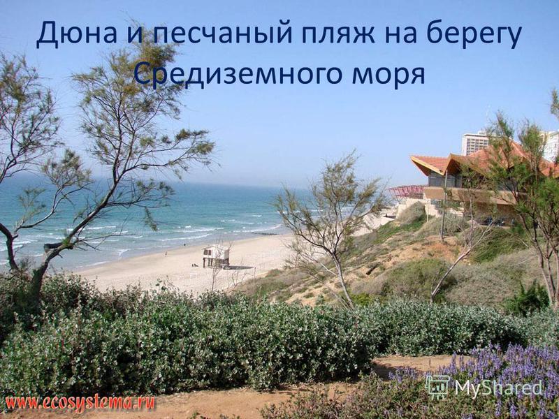 Дюна и песчаный пляж на берегу Средиземного моря