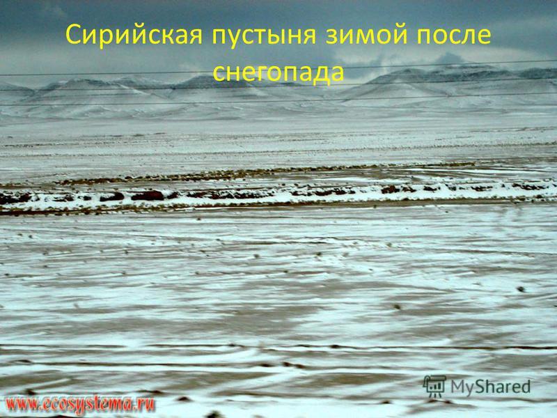 Сирийская пустыня зимой после снегопада