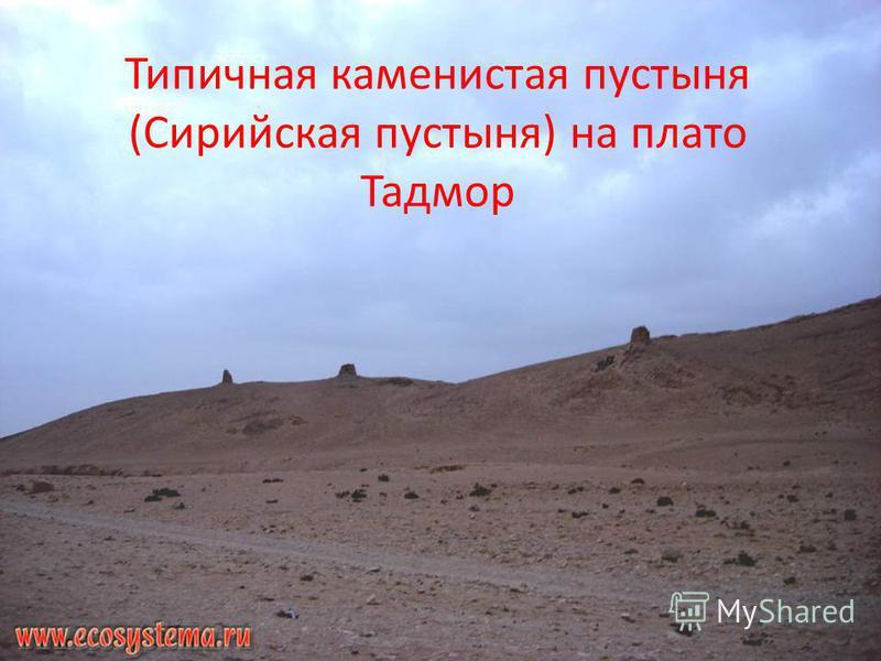 Типичная каменистая пустыня (Сирийская пустыня) на плато Тадмор