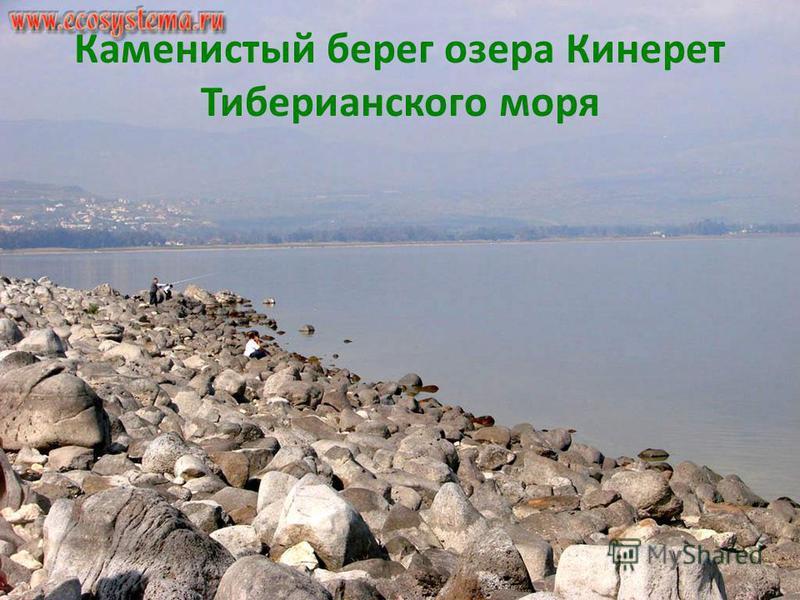 Каменистый берег озера Кинерет Тиберианского моря