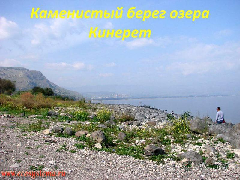 Каменистый берег озера Кинерет