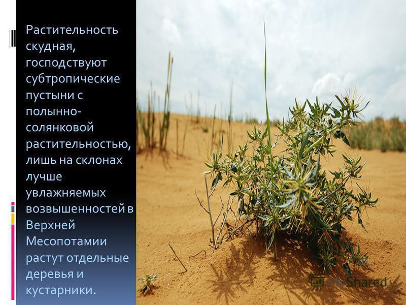 Растительность скудная, господствуют субтропические пустыни с полынно- солянковой растительностью, лишь на склонах лучше увлажняемых возвышенностей в Верхней Месопотамии растут отдельные деревья и кустарники.